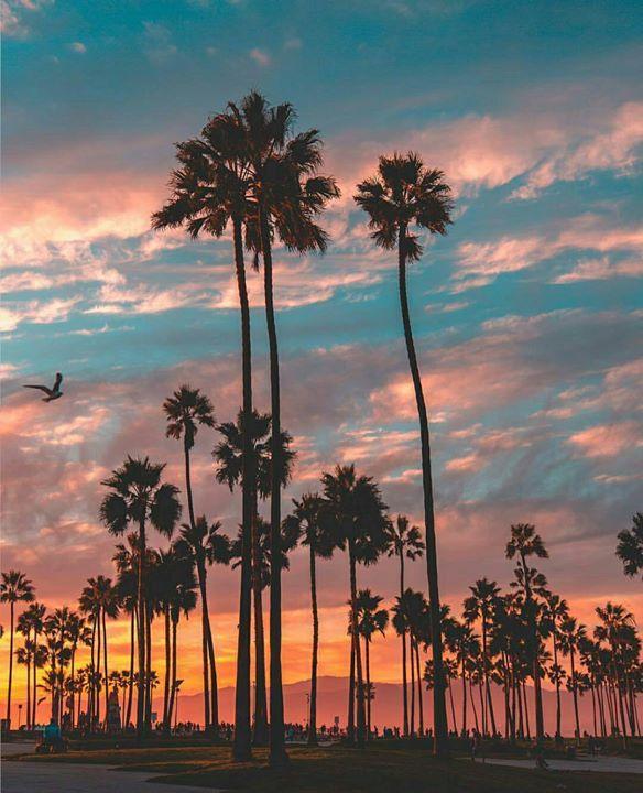 Beautiful Nature Los Angeles: Venice Beach Los Angeles, California