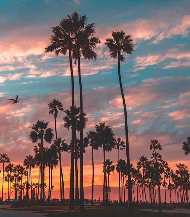 Venice California by Scott Lipps | California Feelings