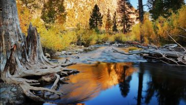Sierra National Forest - California by Pacheco | California Feelings